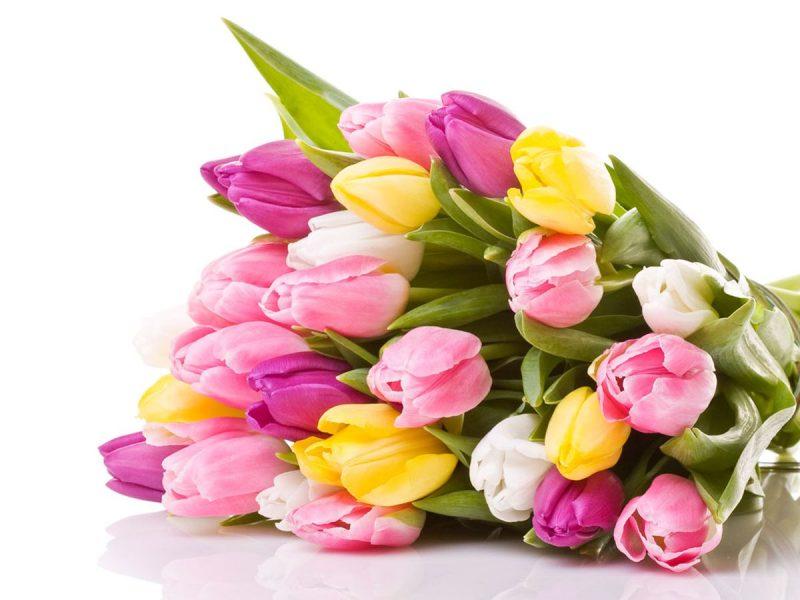 Çiçekçilik Hizmetleri Merkezi